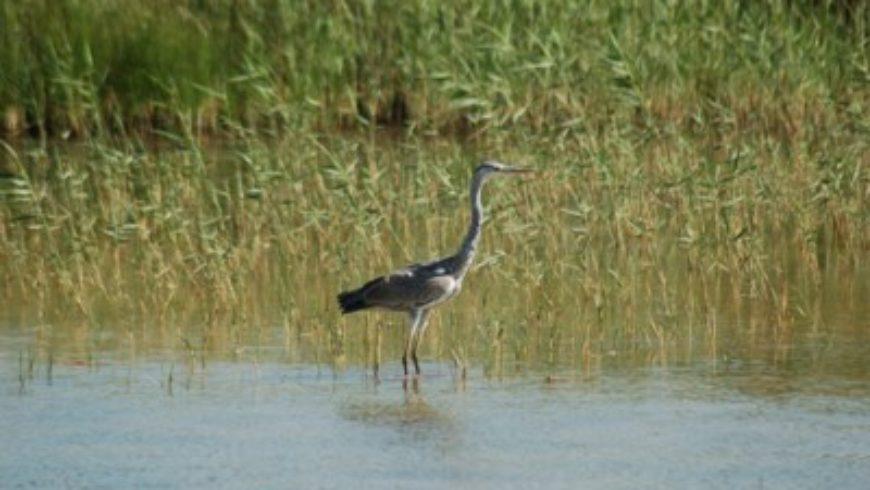 La Riserva di Macchiatonda presentata da Francesco, il giovane ornitologo