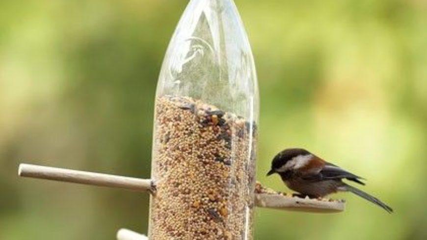 I Consigli della Lipu per aiutare Gli uccelli in inverno