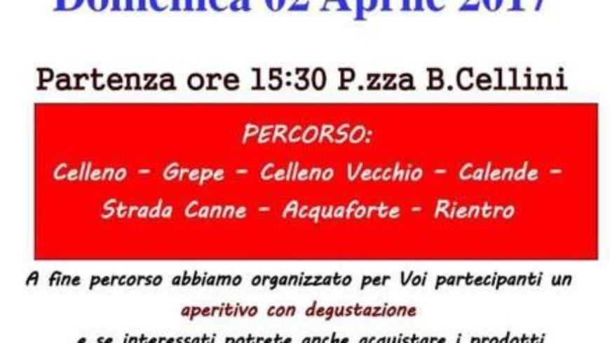 PASSEGGIATA TRA I CILIEGI IN FIORE (Celleno)
