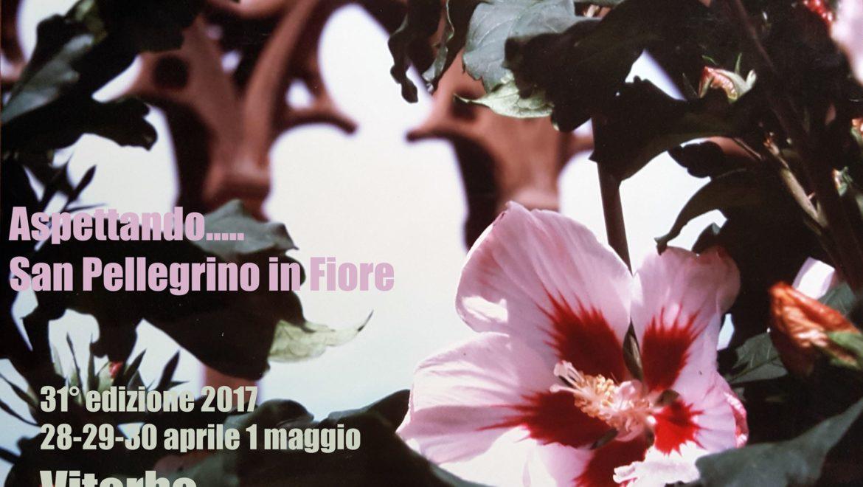 San Pellegrino in Fiore a Viterbo dal 28 aprile al 1 maggio