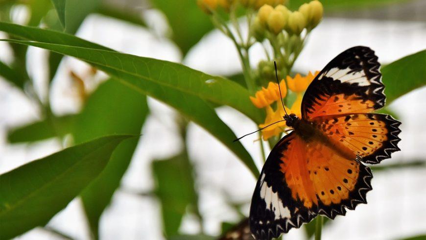 1° maggio all'Orto botanico con la magia delle farfalle tropicali e non solo