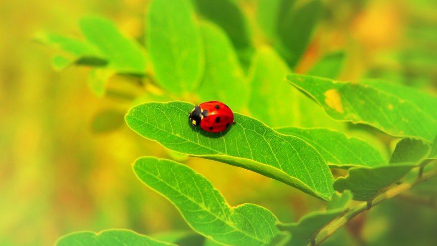 Farfalle, coleotteri e libellule tra le mani dell'entomologo